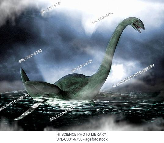 Loch Ness monster. Computer artwork of the Loch Ness Monster swimming on the surface of Loch Ness, Scotland. Sightings of the monster have occurred at least...