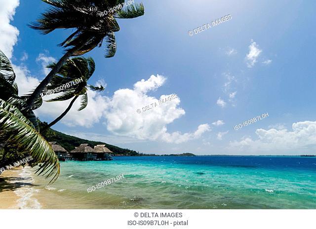 Palm trees and distant beach resort stilt houses, Bora Bora, French Polynesia