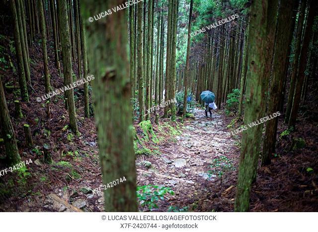 Pilgrims in Ogumotori-goe section, Kumano Kodo, Nakahechi route, Wakayama, Kinki, Japan