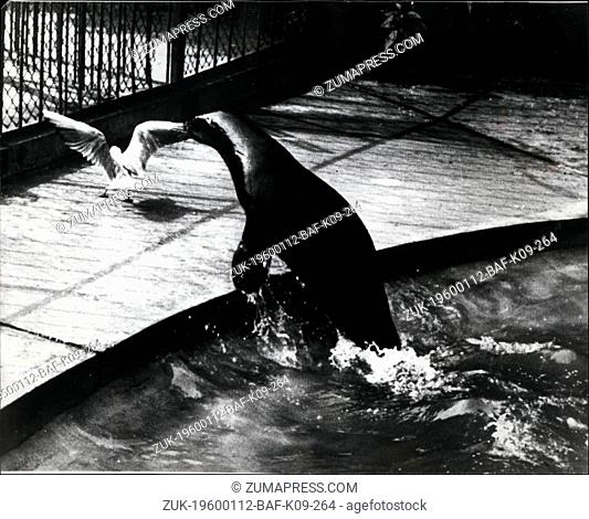1968 - Copenhagen 200; Sea lion caught a seagull stealing his fish. (Credit Image: © Keystone Pictures USA/ZUMAPRESS.com)