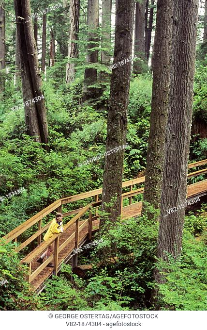 Ancient forest trail, Mike Miller Educational Trail, Newport, Oregon