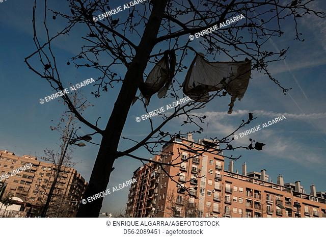 Plastic bags on a tree and buildings, Valencia, Spain