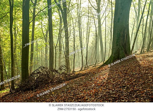 Autumn morning in Stanmer Park, East Sussex, England