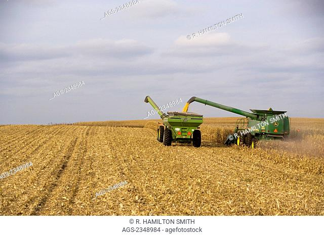 """Agriculture - A John Deere combine harvests grain corn and unloads into a grain cart """"on-the-go""""/ near Northland, Minnesota, USA"""