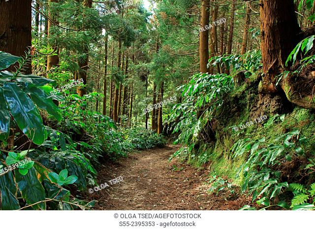 Forest trail from Lago Azul to the ocean's coast. Sao Miguel island, Azores, Portugal