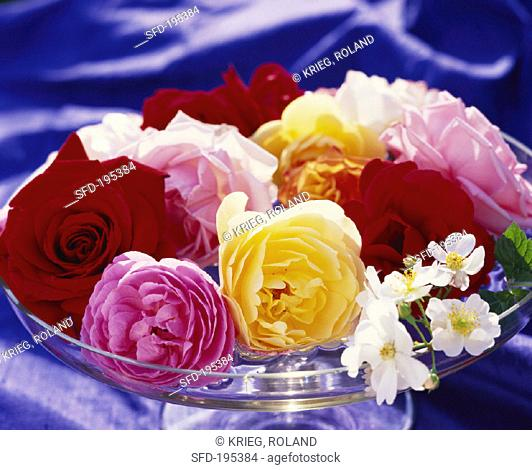 Arrangement of roses in a glass bowl