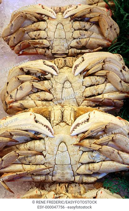 Dungeness Crabs on ice pike at public market. Seattle. Washington, USA