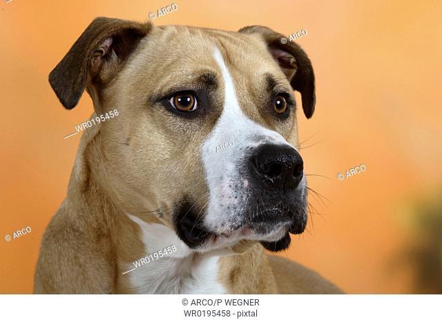 Mixed, Breed, Dog