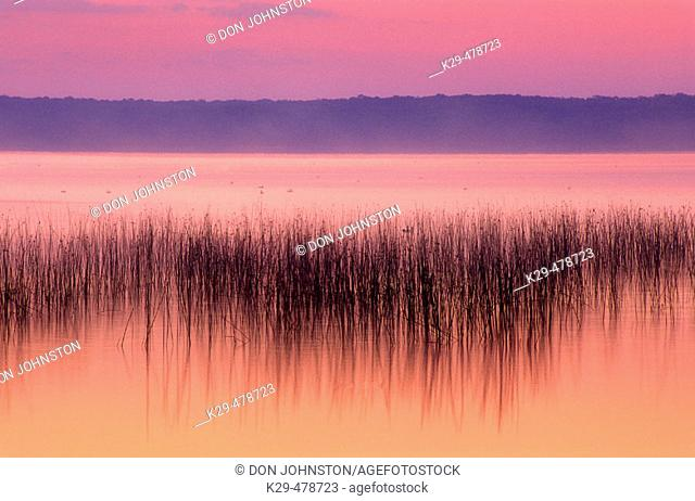 Lake Mindemoya with reed bed before sunrise. Manitoulin Island, Mindemoya. Ontario. Canada
