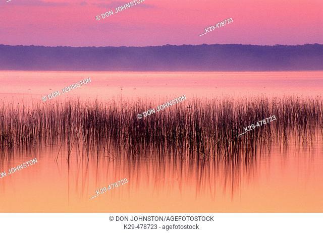 Lake Mindemoya with reed bed before sunrise. Manitoulin Island, Mindemoya. Ontario. Canada
