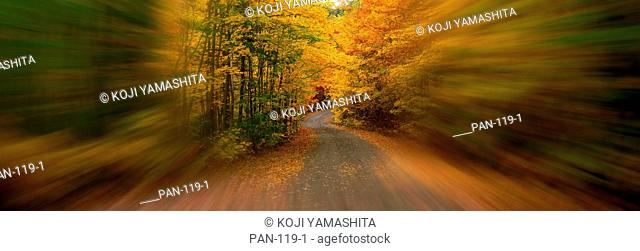Forest Road with Motion Blur, St. Hippolyte, Laurentides, Quebec, Canada