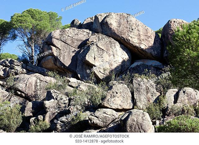 Granite and pines in Cadalso de los Vidrios  Madrid  Spain