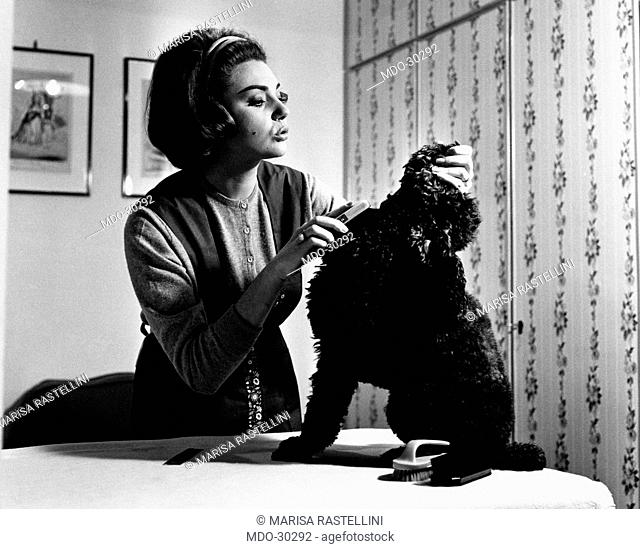 Sylva Koscina with her poodle. Yugoslavian-born Italian actress Sylva Koscina clipping her poodle. Rome, 1964