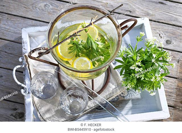 sweet woodruff (Galium odoratum), selfmade may wine with sweetscented bedstraw, Germany
