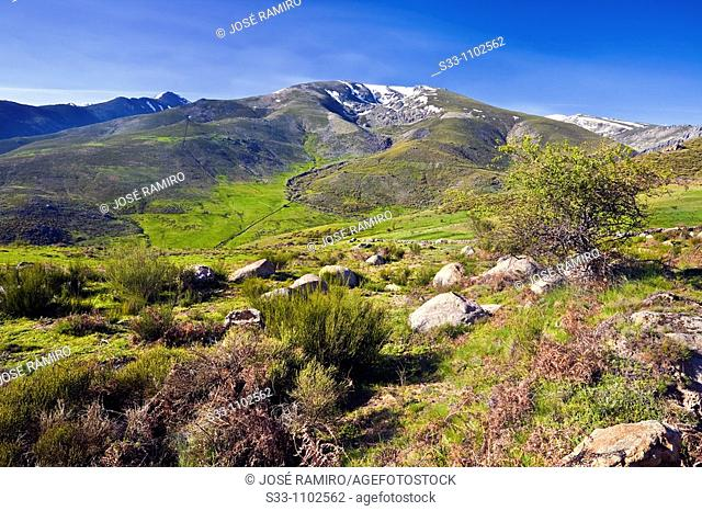Sierra de Gredos, Avila province, Castilla-Leon, Spain