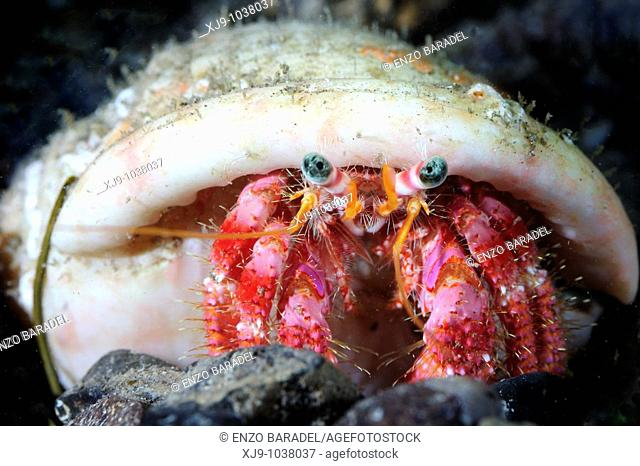 Hermit crab with shell in south Tenerife