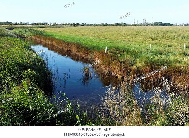 View of freshwater dyke and coastal grazing marsh habitat, West Canvey Marsh RSPB Reserve, Canvey Island, Thames Estuary, Essex, England, September