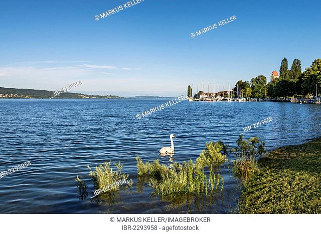 The bank area of Bodman with views across Ueberlinger See lake, Lake Constance region, Baden-Wuerttemberg, Germany, Europe