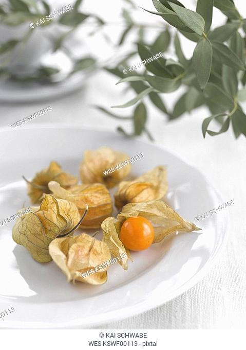 Physalis Physalis peruviana and eucalyptus leaves