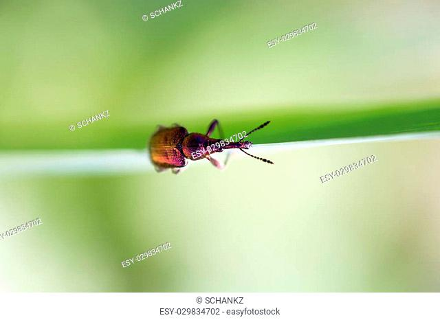 small insect in nature. macro