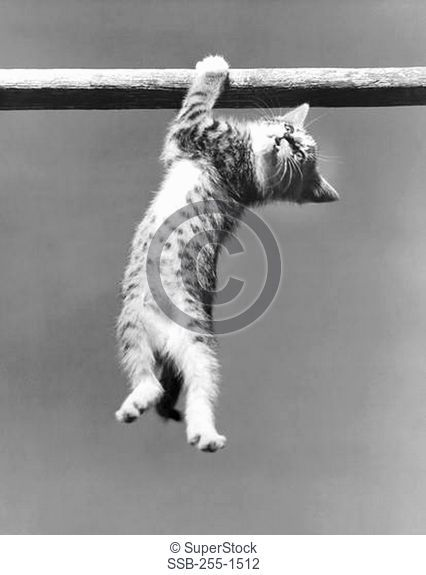 Low angle view of a kitten hanging on a pole