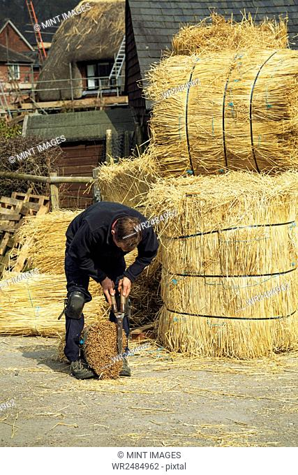 Thatcher cutting a yelm of straw with a pair of shears
