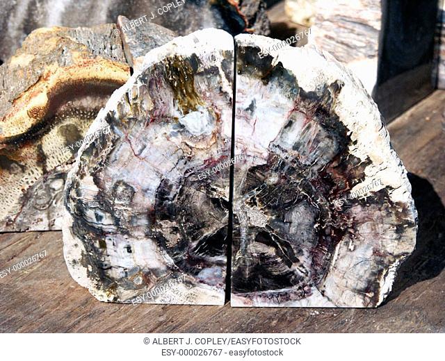 Petrified wood bookend