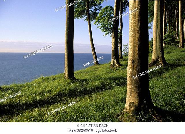 Beech wood in the national park Jasmund near Sassnitz, Baltic coast, Mecklenburg-West Pomerania, Germany