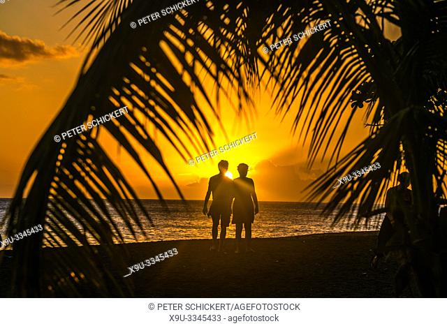 Sonnenuntergang am Strand unter Palmen am Meer, Guadeloupe, Frankreich | sunset under palm trees at he beach in Guadeloupe, France
