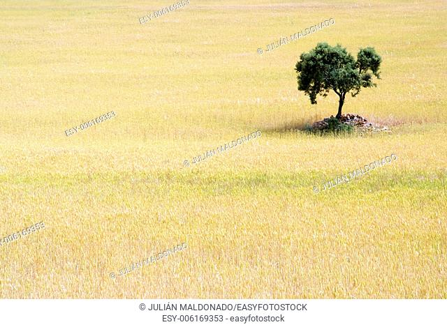 Tree and planting wheat