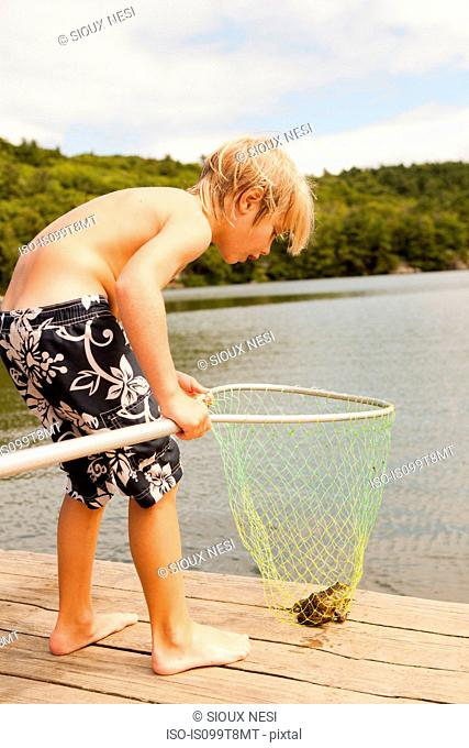 Boy looking at frog caught in net