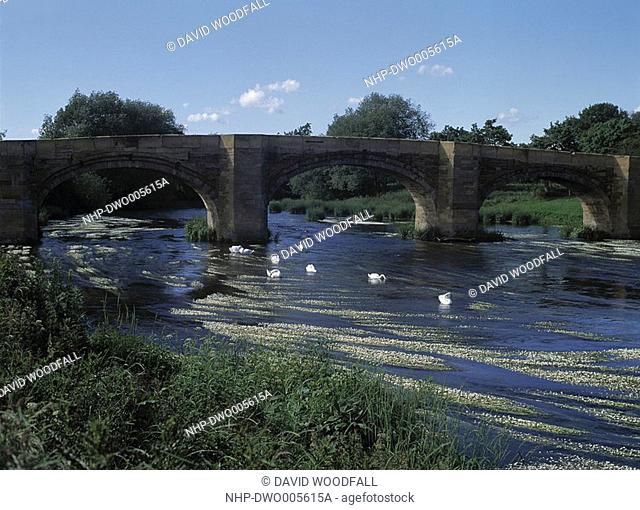 RIVER DEE & STONE BRIDGE with Mute Swans, Clwyd, northern Wales