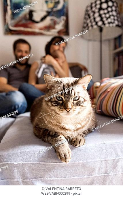 Portrait of tabby cat in the living room with owners in the background