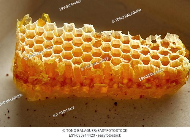 Honey honeycomb detail macro texture