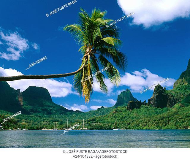 Cook's Bay. Moorea Island. French Polynesia