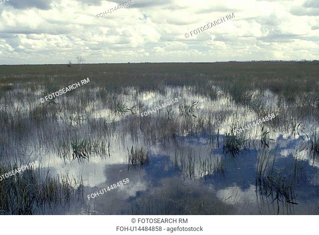 FL, Everglades Nat'l Park, Florida, Scenic view from Pa-Hay-Okee Overlook at the reflection in the grassy water in Everglades National Park