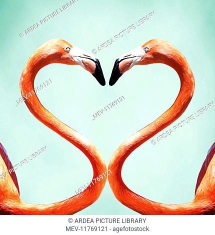 Flamingo a pair of Flamingos creating a heart shape Digital Manipulation: Flamingo PM added background
