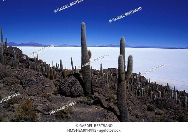 Bolivia, department of Potosi (Los Lipez), the salt desert of Salar d' Uyuni from Isla of Los Pescadores