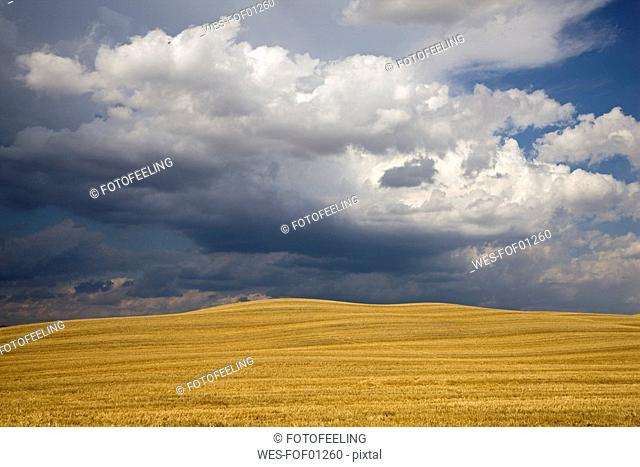 Italy, Tuscany, Thunderclouds over corn field