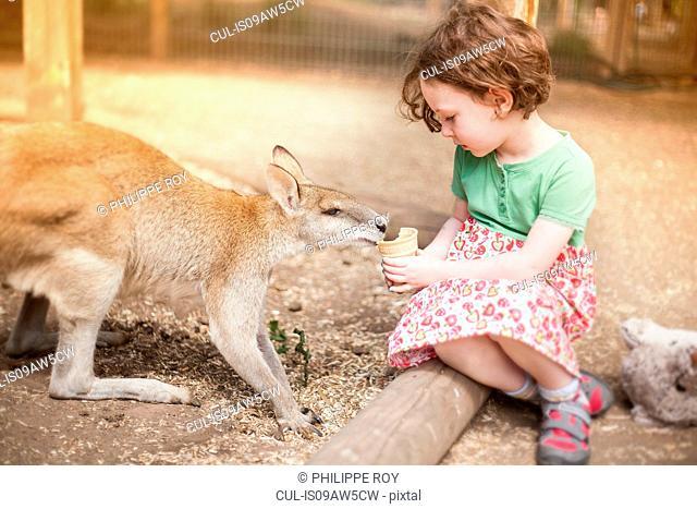 Girl sitting on log feeding kangaroo ice cream cone