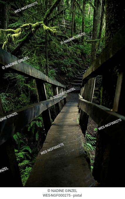 USA, Washington State, Olympic National Park, wooden foothbridge in forest