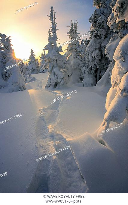 View of path and snow-covered trees at sunrise, Quebec, Canada