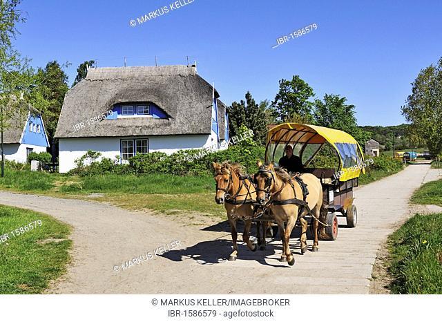 Horse-drawn carriage, public transport on the car-free island, Hiddensee Island, district of Ruegen, Mecklenburg-Western Pomerania, Germany, Europa