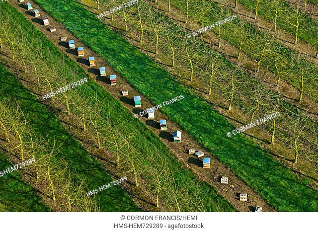 France, Eure, Boisemont, Domaine de Frenelles, the Pressoir d'Or, cider producer Norman, hives in a orchard aerial view