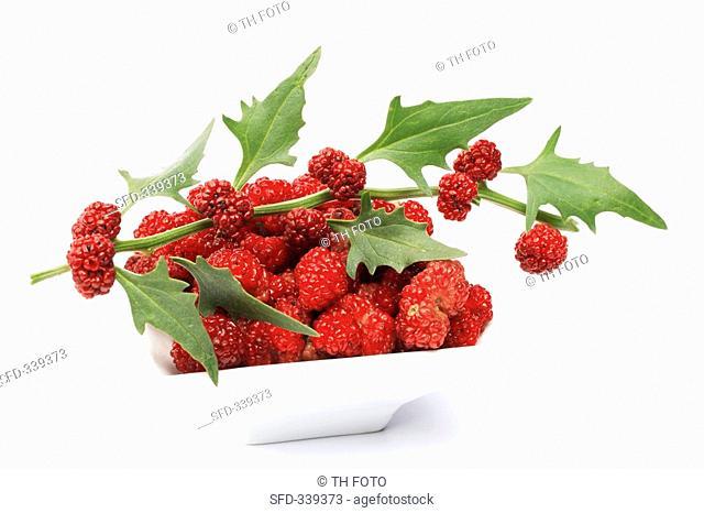 Strawberry spinach with berries Chenopodium capitatum