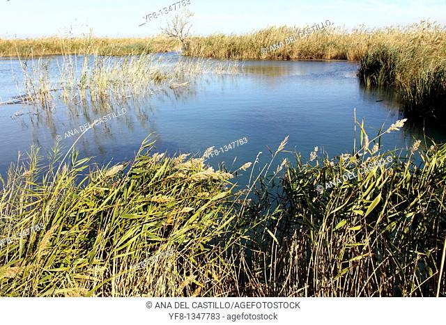 Ullal de Baldovi wetland in La Albufera nature reserve Valencia province Spain