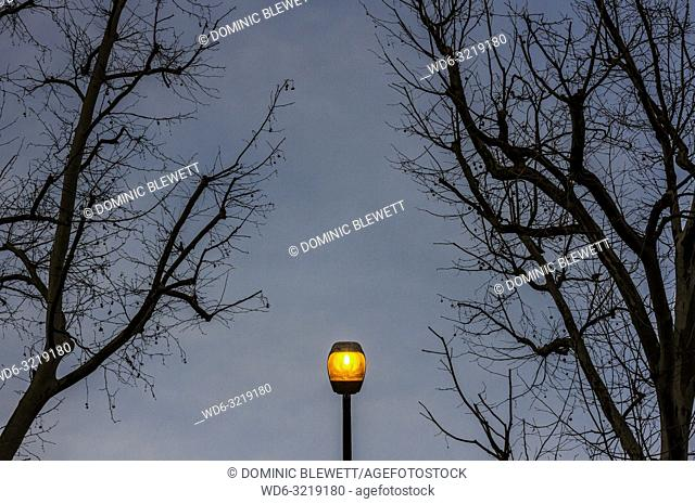 An illuminated streetlight between bare winter branches in Berlin, Germany