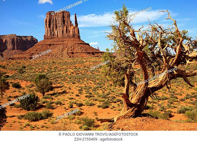Navajo Tribal Reservation, Monument Valley, Utah/Arizona, USA