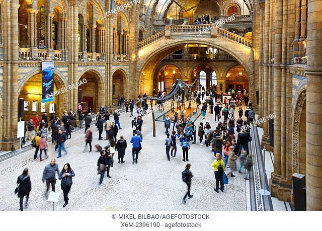 Natural History Museum. London, England, United kingdom, Europe