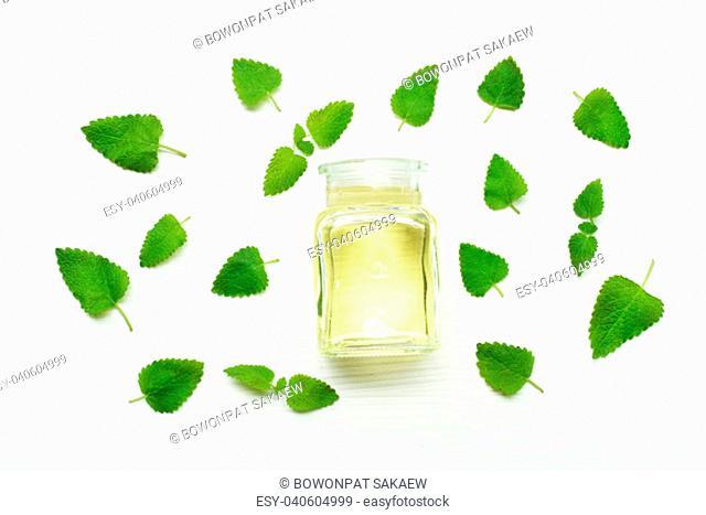 Melissa lemon balm essential oil with fresh leaves